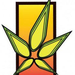 abq-essential-herbal-4-280x329